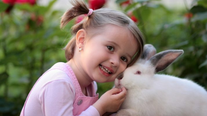 Kids Dental Care : Common Toddler Tooth Problems